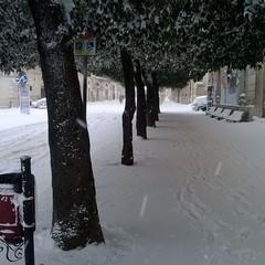 neve alta