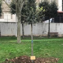 piantumazione dell'albero in memoria di Vito Cristallo