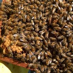 Parco Alta Murgia- api e farfalle