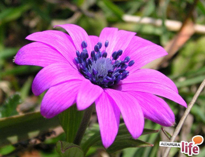 I fiori di campo di inizio primavera for Fiori immagini e nomi