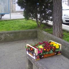 Guerrilla Gardening Altamura