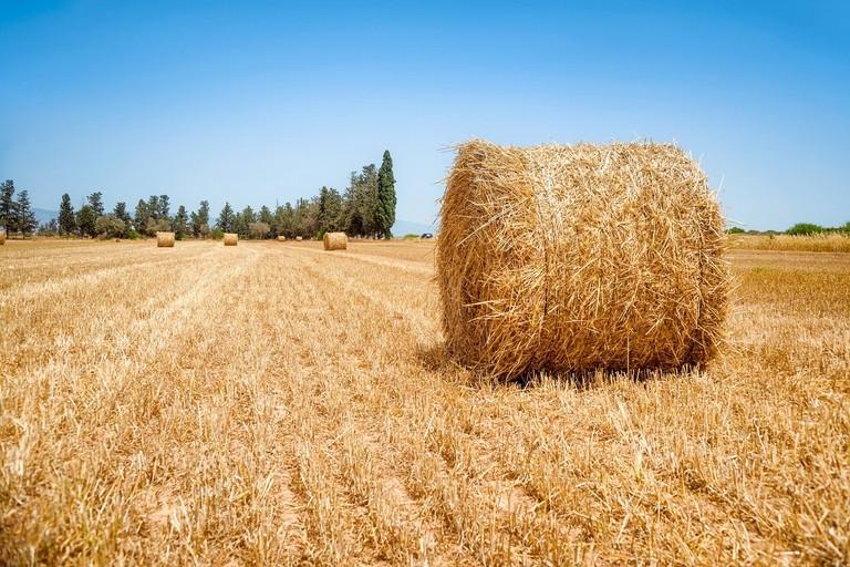 agricoltura sociale puglia