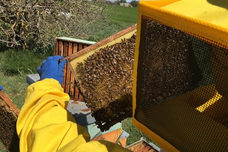 apicoltura - Parco Alta Murgia
