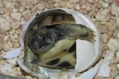Corpo Forestale di Altamura sequestra tartaruga di terra a Gravina