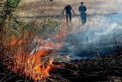 Stato di grave pericolosità per gli incendi boschivi