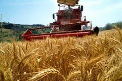 Maltempo incontro Regione - Governo per misure a favore degli agricoltori