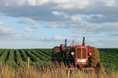 Aiuti ad imprese agricole e zootecniche, Gravi ritardi PSR