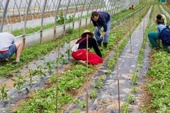 Agricoltura, il settore che salverà l'economia del paese