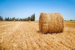Fondi europei all'agricoltura, la Regione ammette i ritardi