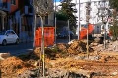 Primi alberi nel nuovo parco inclusivo in zona Carpentino