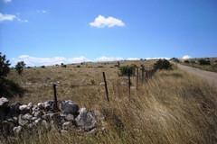 Il Parco dell'Alta Murgia richiede la sospensione dei lavori sulla strada comunale Contenisio