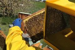 """Il progetto """"Alta Murgia: un Parco per api e farfalle"""" entra nel vivo"""