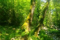 Cambiamenti climatici: 3,8 milioni di euro per il Parco della Murgia