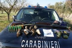 Attività vietata di caccia, una denuncia