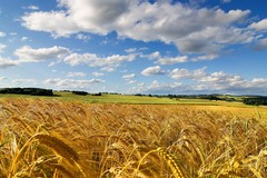 Agroalimentare, Altamura in quattro distretti del cibo