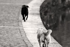 Randagismo, la Lega del Cane contro l'abbandono