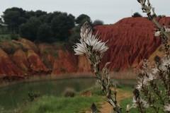 La Regione cerca fotogrammi della Puglia rurale
