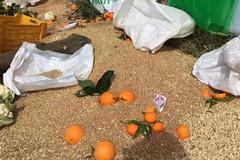 Agricoltori protestano per i prezzi, gettati a terra grano e arance