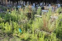 Altamura: degrado, abbandono e questioni irrisolte