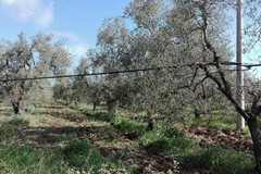 Maltempo: travolto da un ramo spezzato da forte vento, morto anziano