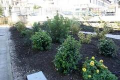 Nuova area verde in via Carpentino, arrivate otto idee progettuali