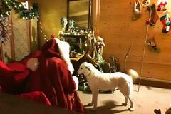 Babbo Natale ha trovato casa nel Bosco di Gravina