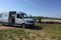 Mobilab, il laboratorio mobile che va negli allevamenti ovicaprini