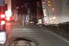 Sulla strada Corato-Altamura un altro incidente provocato da cinghiali