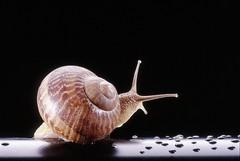 Oggi la prima festa nazionale di Slow Food