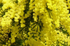 Altamura celebra la Festa della Donna
