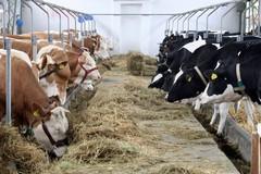 Due milioni di euro per aiutare il settore lattiero-caseario