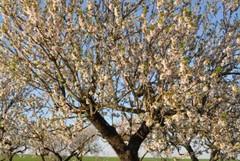 Per la Giornata degli alberi scelta la Villa Comunale