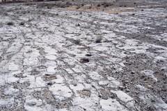 """""""La Valle dei dinosauri diventi patrimonio Unesco"""""""