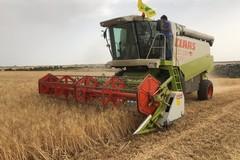 """""""Contrastare caro-pasta con aumento produzione di grano duro italiano"""""""