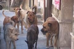 Dalla Regione fondi per i canili comunali