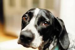 Cani randagi, continuità servizio di ricovero e mantenimento