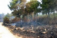 Gli incendi boschivi in Puglia nel 2017, il 18 % del totale