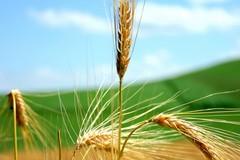Ricerca in agricoltura, fra i valutatori esperti anche due altamurani