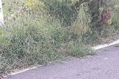 Erbacce diffuse e segnaletica inesistente su La Selva
