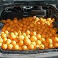 In manette per un pieno di vitamina C