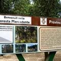 Vincono un viaggio d'istruzione nella Foresta Mercadante