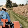 Consiglio approva legge  su agricoltura sociale.