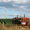 Sinistra Ecologia e Libertà interviene a sostegno del lavoro agricolo
