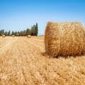 Ottimo lavoro per legge su agricoltura sociale