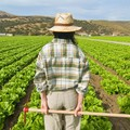 Puglia seconda in Italia per imprese agricole al femminile