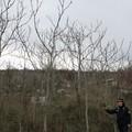 """Parco dell'Alta Murgia, sparisce l'infestazione della pianta  """"ailanto """""""