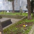 Guerrilla Gardening: un nuovo tocco di colore per piazza S. Teresa