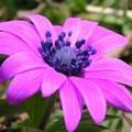 I fiori di campo di inizio primavera