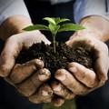 Ambiente, consumo di suolo in Puglia tra 7% e 9%