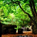 Finanziamenti per un'Altamura più verde